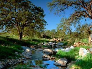 обои Ручей в парке среди камней фото