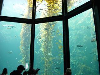 обои Большой океанариум фото
