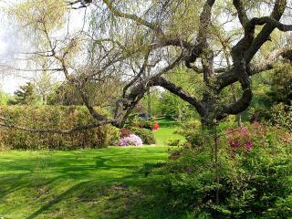 обои Ветвистое весеннее дерево в парке фото
