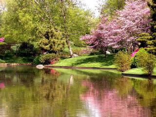 обои Японский сад, пруд, сакура фото