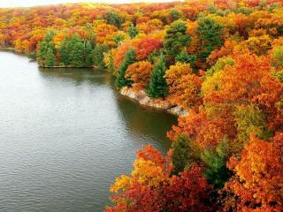 обои Красивый осенний лес у озера фото