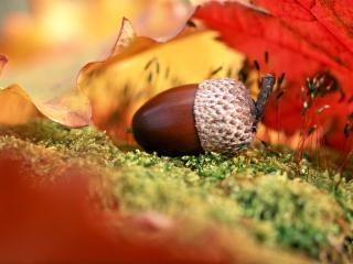 обои Осенний коллаж фото