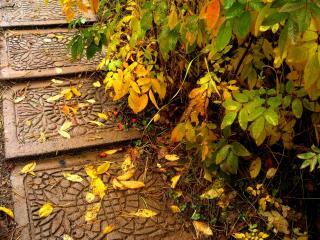 обои Дворовая плитка в желтых листьях фото