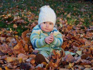 обои Сидит в осенних листьях фото
