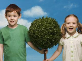 обои Посадили дерево фото