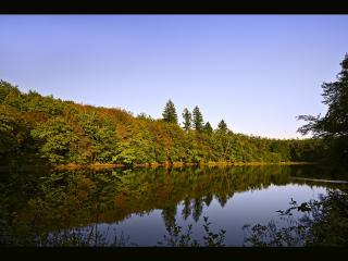 обои Красивая стена деревьев на берегу озера фото