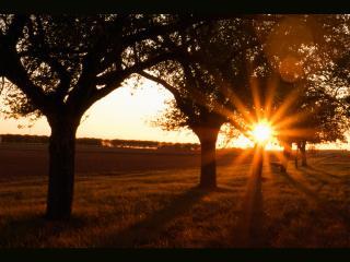 обои Красивое солнце заката фото