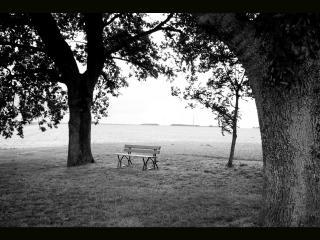обои Одинокая скамья в саду фото
