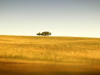 обои Деревья на горизонте фото