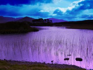 обои Летний пруд на восходе солнца фото