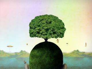 обои Дерево голова зеленое фото