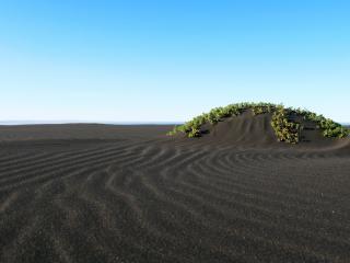 обои Участок травы в пустыне фото