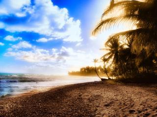 обои Солнечные пальмы фото