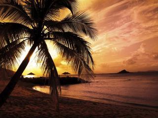 обои Силуэт пальмы на песчаном берегу фото