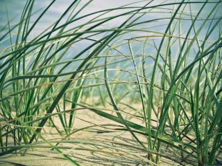 обои Зеленая трава на песке фото