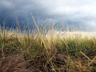 обои Сухая трава фото