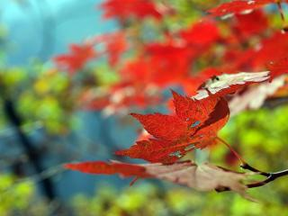 обои Осень пришла фото
