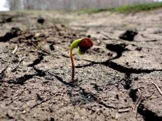 обои для рабочего стола: Росток растет сквозь сухую землю