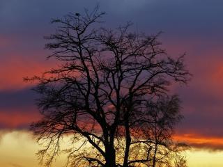 обои Весеннее дерево и закат фото