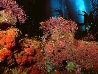 обои Красные коралы фото