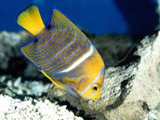 обои Красивая рыбка фото