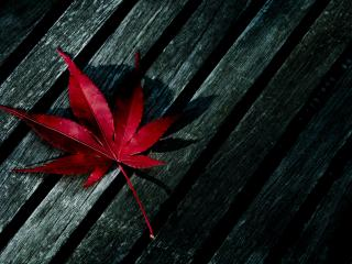 обои Красный листок на досках фото