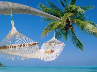 обои Гамак на пальме над морем фото