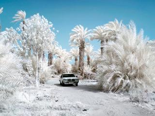 обои Автомобиль среди белых пальм фото