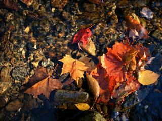 обои Опавшие листья на берегу реки фото