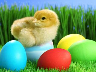 обои Яйца на Пасху и цыпленок фото