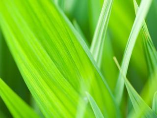 обои Ярко-зеленая трава крупным планом фото