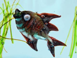 обои Рыба с выпученными глазами фото