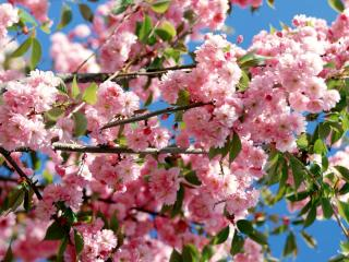 обои Цветущая и ароматная весна фото