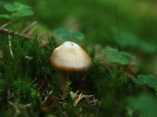 обои Одинокий грибочек в траве фото