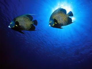 обои Рыбки около поверхности фото