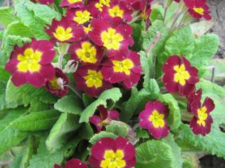 обои Весенние яркие цветочки фото