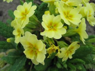 обои Желтые цветочки среди зелени фото