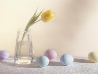 обои Пасхальные яйца и тюльпан фото