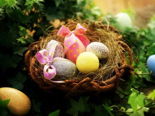 обои Пасхальные яйца в птичем гнезде фото