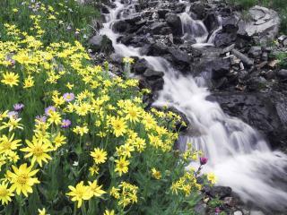 обои Летний ручей у цветущей поляны фото