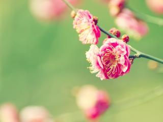 обои Розовый цвет фото