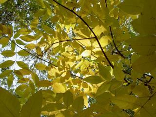 обои Под желтыми осенними листьями фото