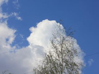 обои Небо с облаками и дерево фото