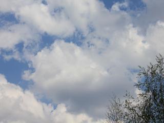 обои Небо и березка фото