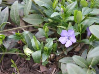обои Маленький цветочек у земли фото