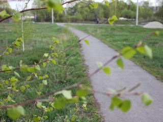 обои Сельская дорожка фото