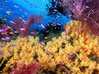 обои Вид под водой фото