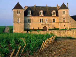 обои Виноградник Кло-де-Вужо. Г. Вужо. Франция фото