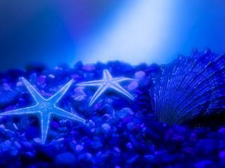 обои Пара морских звезд фото