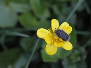 обои Жучок на желтом цветке фото
